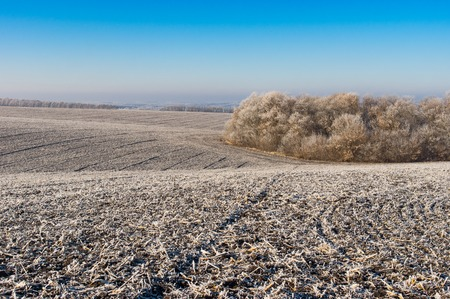 covered fields: Landscape with agricultural fields in Ukraine covered with hoar-frost at fall time Stock Photo