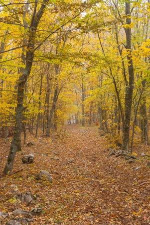 earth road: Earth road in Crimean beech-wood forest at misty autumnal day