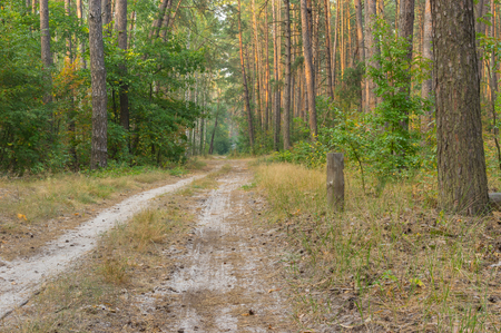earth road: Empty earth road in evening mixed forest Stock Photo