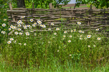 neighbouring: Ukrainian historical identity - wattled fence in gardens