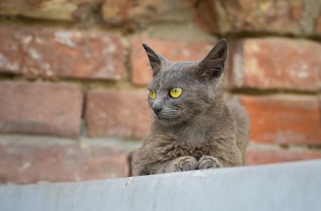 parapet: Portrait of beautiful alien cat sitting on a parapet Stock Photo