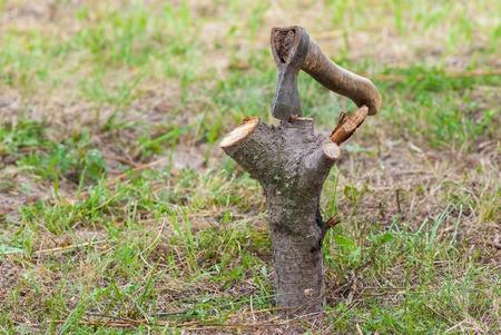 cherrytree: Old axe stuck a cherry-tree log in a summer garden