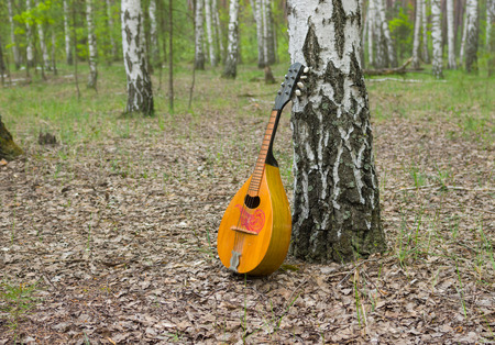 doubled: Lonely mandolin lost in a birch forest