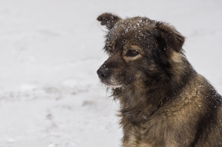 half blooded: Outdoor portrait (side view) of cute mixed-breed dog winter season