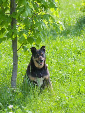 half blooded: Happy stray dog having rest under a tree shadow Stock Photo