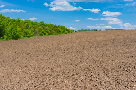 come up: Ukrainian agricultural field before young crops come up