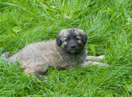 half blooded: Stray puppy having rest in the fresh grass Stock Photo