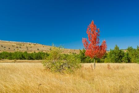 tableland: two detached birches on Ai-Petri mountain tableland in Crimean peninsula at fall season Stock Photo
