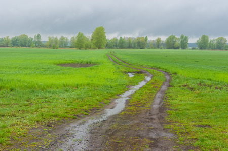 wide  wet: Landscape with agricultural fields and country road in central Ukraine at rainy spring day Stock Photo