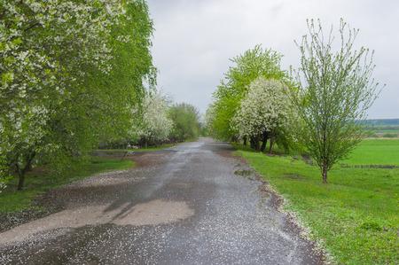 garden settlement: Country road in remote village in Poltavskaya oblast, Ukraine