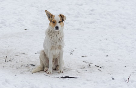 half breed: Outdoor portrait of cute street dog sitting on a snow