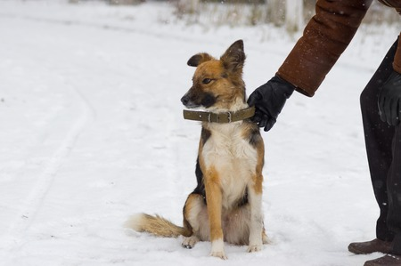 hand guards: Man is ready to let dog off on a winter snowy street Stock Photo