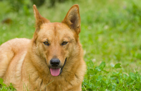 half breed: Portrait of cute mixed breed dog