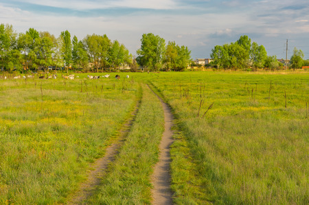 earth road: Evening landscape with earth road through water meadow in rural area near Kremenchuk city, Ukraine.