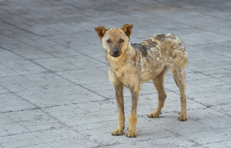 half blooded: Cute street dog recovered from ringworm