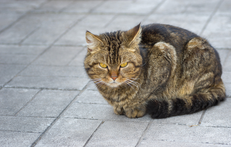 timorous: Portrait of city cat sitting on a pavement Stock Photo