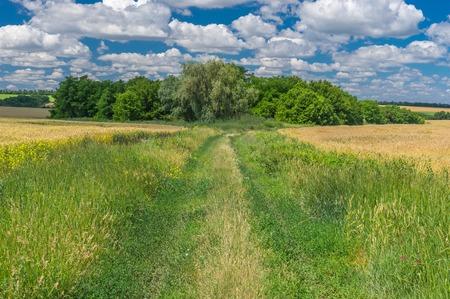 earth road: Ukrainian summer landscape with earth road between wheat fields Stock Photo