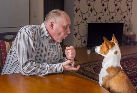 laughable: Mature man having nervous conversation with basenji dog sitting at the table.  The dog listens with passivity, while man gesticulates.