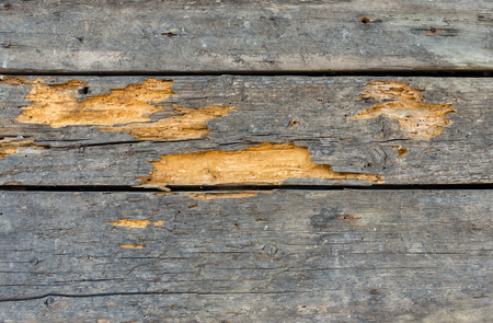 abode: Ancient wooden wall destroyed by weather, time and shipworms