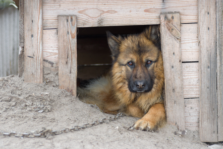 half blooded: Cute country dog inside its kennel