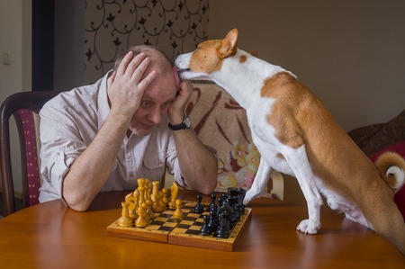 desperately: Smart basenji dog desperately trying to calm down its opponent licking him during chess family tournament
