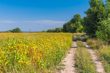 earth road: Earth road on an edge of agricultural field with soybean in Ukraine