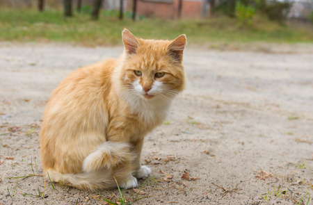 guarded: Outdoor portrait of guarded cream tabby cat Stock Photo
