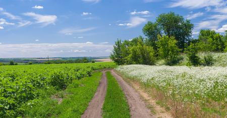 paysage ukrainien d'été avec une route de campagne Banque d'images