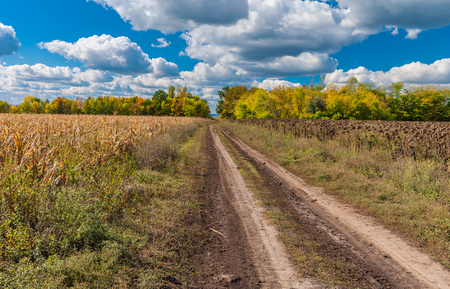 earth road: Autumnal landscape with earth road between sunflower and maize fields in  in central Ukraine Stock Photo