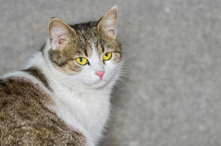 ordinary: Outdoor portrait of beautiful ordinary cat (male) with yellow eyes Stock Photo