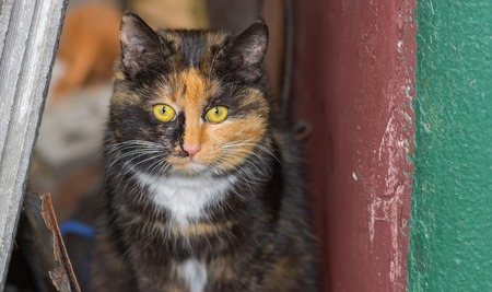 timorous: Portrait of three colored cat in its street shelter Stock Photo