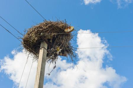 White stork nest on an electric pole in Ukraine