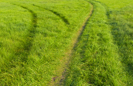 gramma: Two tracks in wild meadow Stock Photo