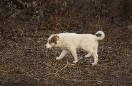 Brave stray puppy in search of mom walking through sinister place Stock Photo