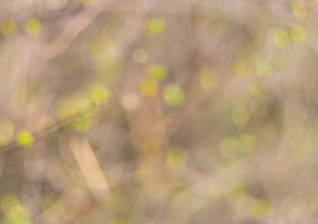 pastel shades: Abstract natural background in pastel shades