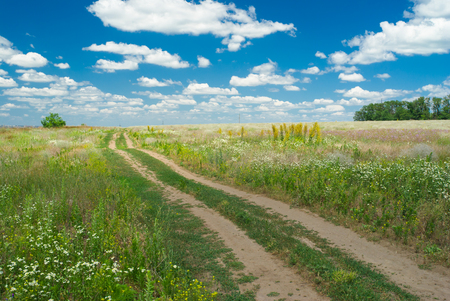 ukranian: Earth road in flowering Ukranian steppe