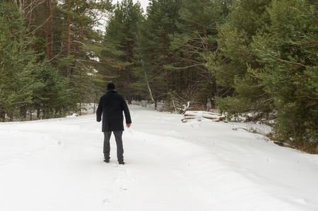 piny: Lonely wanderer on the edge of winter piny forest