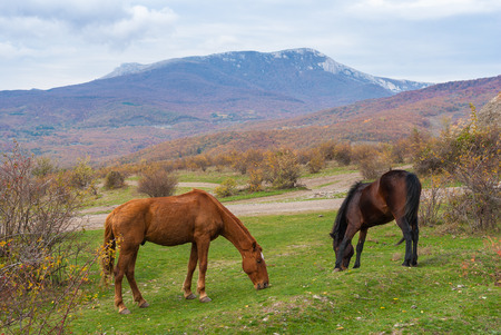 annexed: Two horses grazing in autumnal mountains Stock Photo