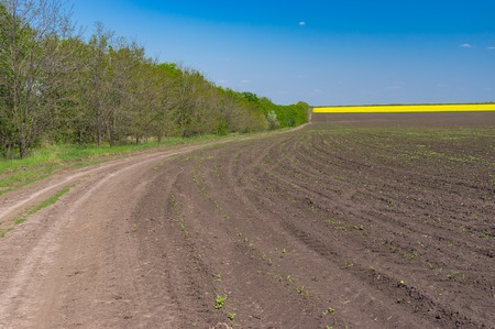 earth road: Earth road next to agricultural field with maize in central Ukraine at spring season