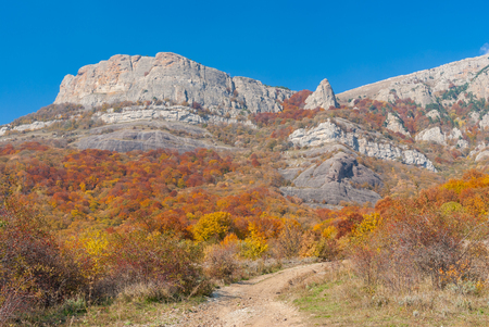 road autumnal: Earth road in autumnal forest on mountain pasture Demerdzhi, Crimean peninsula