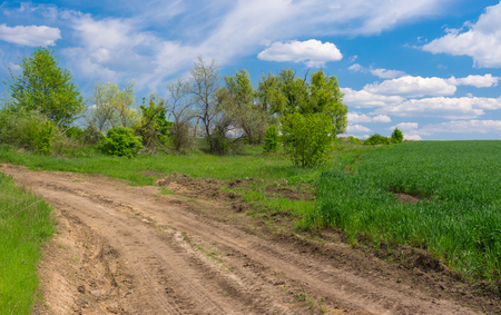 earth road: Spring landscape with earth road on the edge of green wheat field in central Ukraine Stock Photo