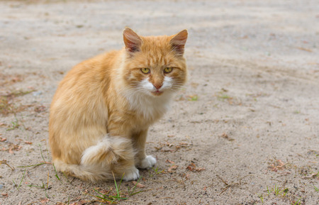 guarded: Outdoor portrait of guarded cat