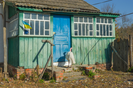 destitution: Modern life in rural Ukrainian village - lonely turkey is waiting for master returning home Stock Photo