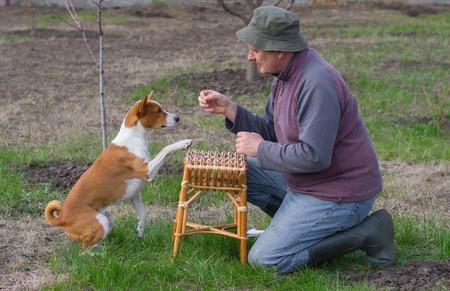 ludicrous: Mature man teaching smart basenji dog simple tricks in spring garden