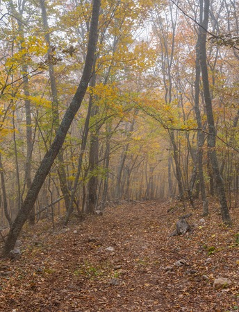 earth road: Earth road in Crimean beech-wood forest at misty day at fall season