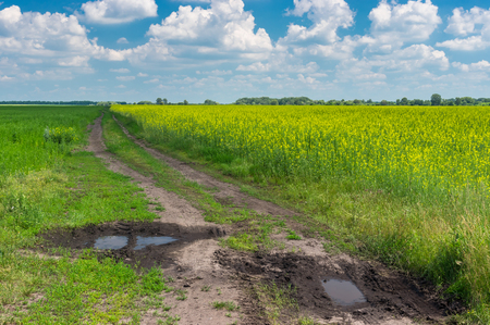 Summer landscape with dirty road on the edge of agricultural field with rape-seed