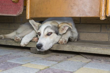 secluded: Sad dog lying in its secluded corner
