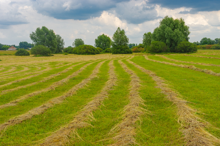 Summer landscape with rows of mown hay on a water-meadow in Poltavskaya oblast, Ukraine Stock Photo