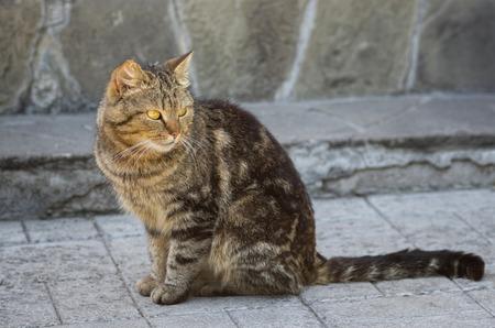discreto: Retrato de gato de la ciudad vigilado Foto de archivo