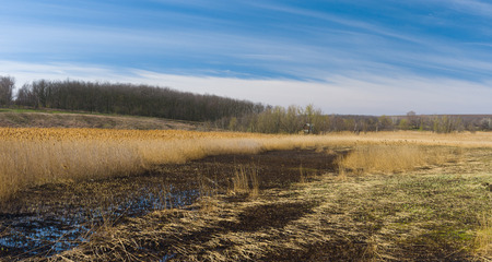 rushy: Early spring panoramic landscape with flood-lands in Ukraine